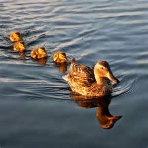 ducks-in-a-row1